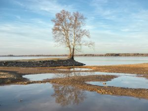A lone tree stands on the banks of the Tennessee River in Decatur, Alabama